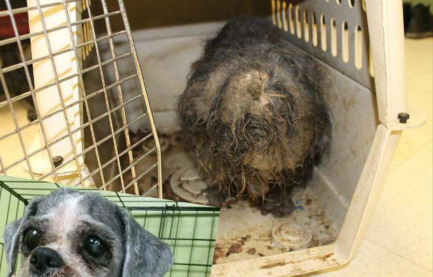 Niesamowita przemiana porzuconego i zaniedbanego psa