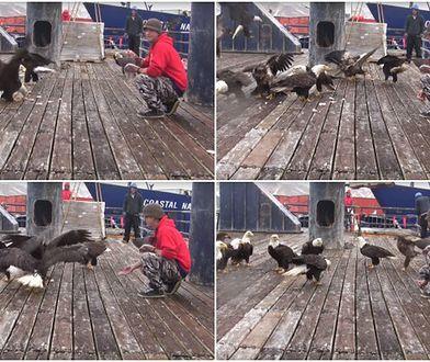 Bielik amerykański na wyciągnięcie ręki! Zobacz niezwykłe wideo