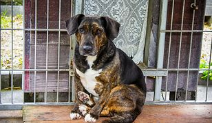 Żebracy znowu masowo wykorzystują psy. Funkcjonariusze są bezradni