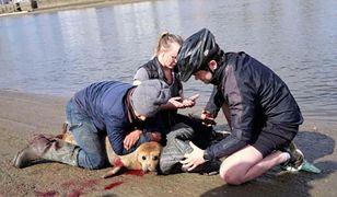 """Pies zaatakował fokę. """"Skończyło się tragicznie"""""""