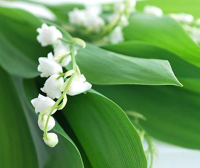 Rośliny pod ochroną lepiej zostawić w spokoju. Unikniesz surowej kary