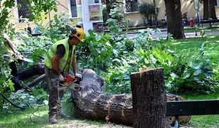Jak zapobiec wycince drzew? Oto dziewięć sposobów, by powstrzymać piły łańcuchowe