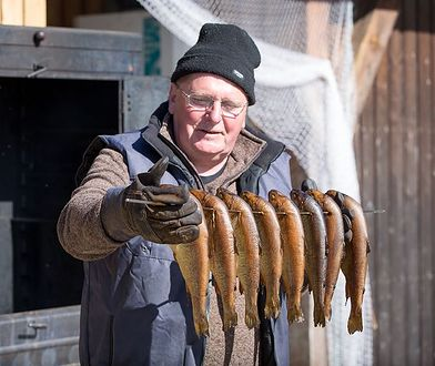 Świeże ryby i piwo. Smaki północnych Niemiec