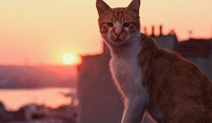 """""""Kedi"""" znaczy kot. """"To zwierzę dopasowane do naszego stylu życia. Po prostu sobie jest"""""""