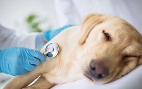 Biegunka u psa – leczenie i zapobieganie