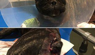 Psa czekają jeszcze dwie operację
