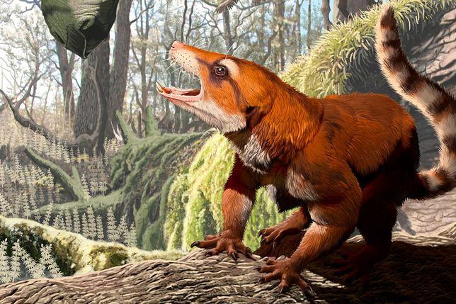 Cifelliodon wahkarmoosuch był czymś w rodzaju połączenia jaszczurki ze ssakiem