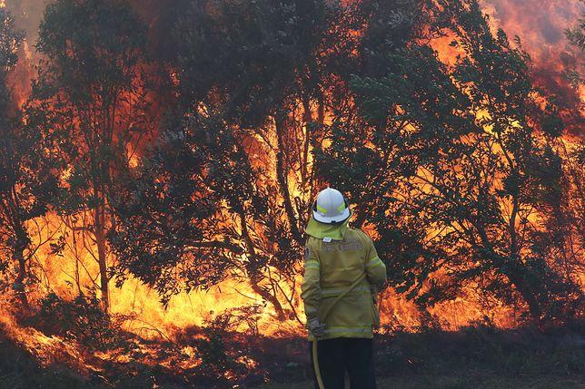 Po pożarach w Amazonii ogień wybuchł w Australii