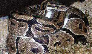 Wąż musi należeć do kogoś z okolicy