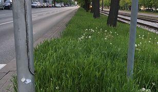 Warszawa. Kosiarki poszły w ruch. Spółdzielnie koszą trawniki