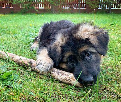 """Aktywistka oskarżyła urzędnika o zniszczenie budy bezdomnych psów. """"Uratowałem je"""""""