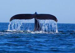 Kalifornia - gigantyczne wieloryby w Zatoce Monterey