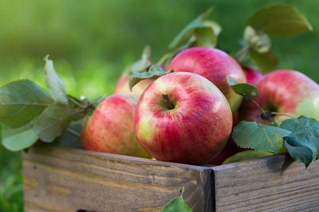 Interwencyjny skup jabłek – próba zmierzenia się z problemem nadmiaru jabłek