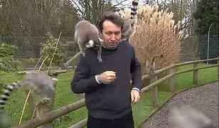 """Reporter BBC Alex Dunlop """"zaatakowany"""" w zoo"""