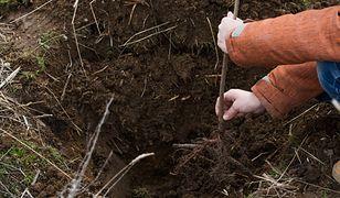 Wszelkie prace związane z sadzeniem musisz wykonać zanim nadejdą mrozy