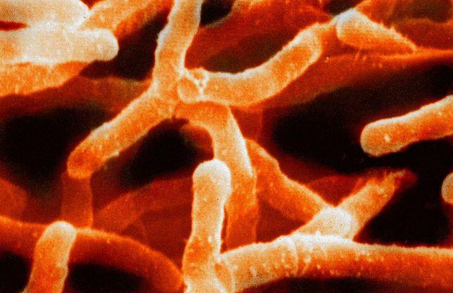 Nowoodkryta bakteria wykazuje niezwykłe właściwości