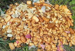 Bieszczady. W lesie znaleziono stos śmierdzących serków