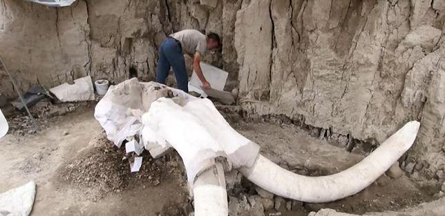 W Meksyku odnaleziono szczątki mamutów