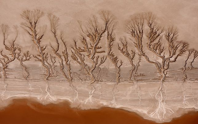 Magiczne wzory na pustyni Mojave