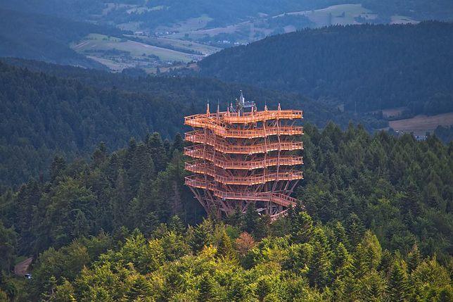 Wieża widokowa i ścieżka w koronach drzew w Krynicy-Zdroju