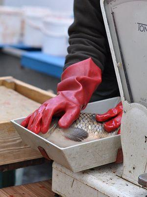 Co czuje karp, zanim trafi na Twój talerz? Przeczytaj i nigdy nie kupuj żywych ryb