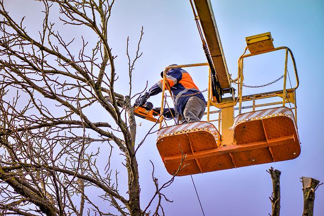 W Sopocie wycięli drzewa przygotowując plac pod budowę hotelu