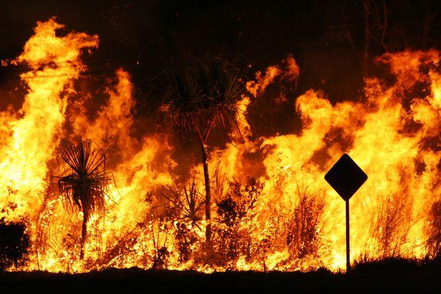 Tegoroczny sezon pożarów w Australii trawi lasy wyjątkowo bezlitoścnie