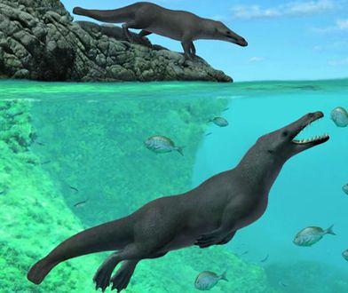 Tak mógł wyglądać prastary wieloryb