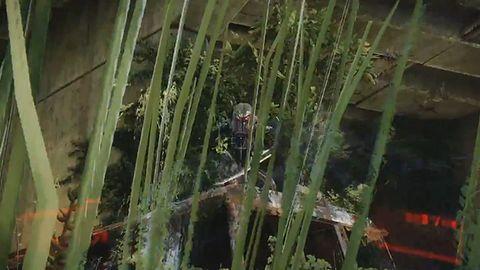 Crysis 3 - buszujący w trawie