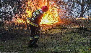 Podczas majówki może być ogłoszony zakaz wstępu do lasu. Panuje bardzo wysokie zagrożenie pożarowe