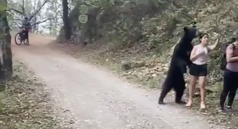 Przerażające nagranie ze szlaku. Reakcja kobiety na niedźwiedzia podbija internet