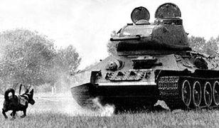 Psy-miny to bez wątpienia jeden z najdziwniejszych i okrutnych rodzajów broni. Powyższe zdjęcie zostało wykonane na rekonstrukcji i nie pochodzi z okresu II wojny światowej.