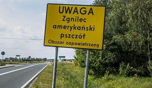 Zgnilec amerykański atakuje pszczoły w Polsce
