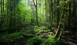 Lasy w Polsce. Koronawirus sprawił, że natura odżywa