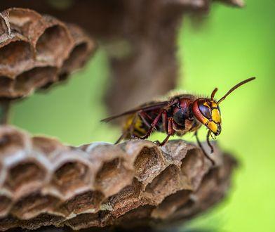 Zmiany klimatyczne mają poważny wpływ na pszczoły