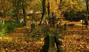 Jak znaleźć grób na cmentarzu w Poznaniu? Skorzystaj z wyszukiwarki