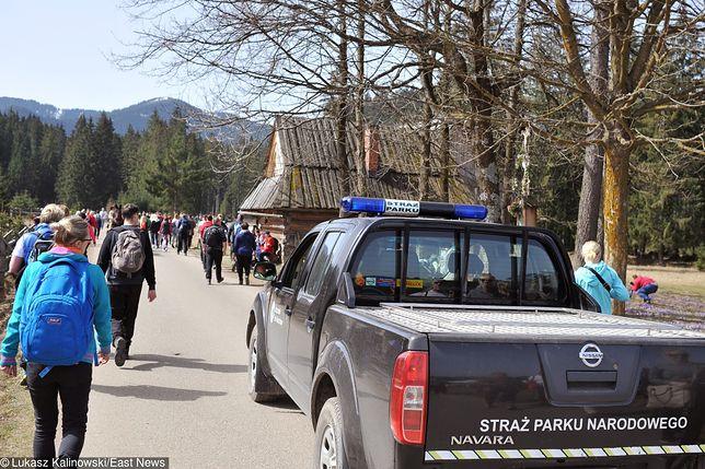 Tatry. Strażnicy Tatrzańskiego Parku Narodowego interweniowali ws. psa