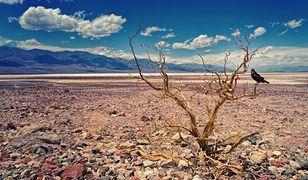 Dolina Śmierci w USA. Nowy rekord temperatury