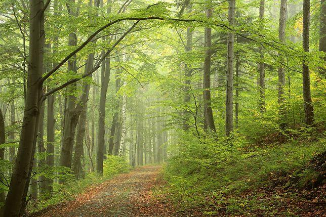 Problem śmieci w lasach jest ogromny (zdjęcie ilustracyjne)