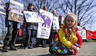 Obrońcy praw zwierząt będą pikietować przed cyrkiem, który ma wystąpić w Poznaniu