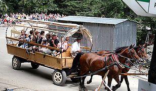 Dramatyczna sytuacja koni pracujących na trasie do Morskiego Oka