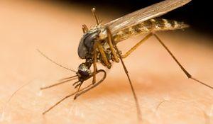 8 sposobów na to, jak pozbyć się komarów