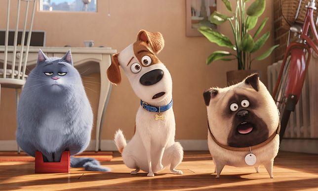 ''Sekretne życie zwierzaków domowych'' już na DVD, Blu-Ray i Blu-Ray 3D
