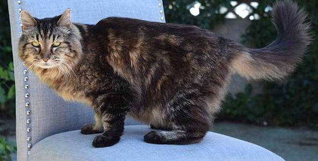 Oto najstarszy kot na świecie!