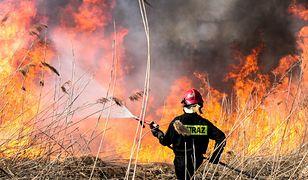 Ruszył sezon na wypalanie traw. Strażacy mają ręce pełne roboty
