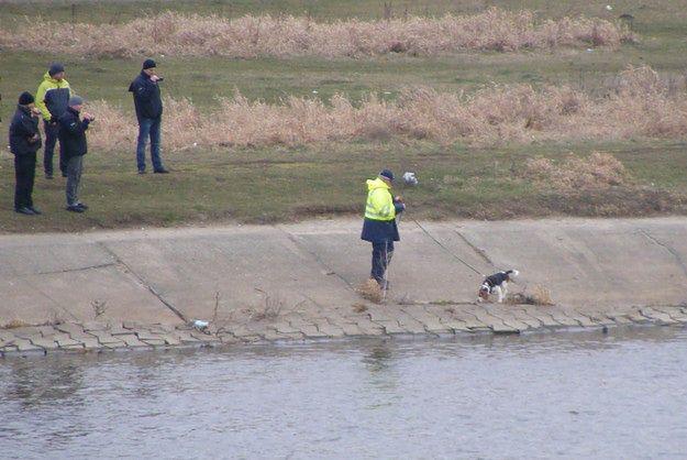 Sprawa zaginięcia Ewy Tylman. Psy tropiące niemieckiej policji szukały śladu 26-latki