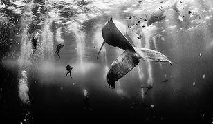 Najlepsze zdjęcia National Geographic 2015