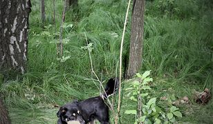 Orzesze. Policjanci uratowali niewielkiego kundelka przywiązanego do drzewa