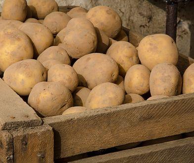 Polscy rolnicy zebrali dużo mniej ziemniaków niż rok wcześniej.