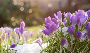 Nareszcie Wiosna! Pierwszy dzień wiosny wypadł w czwartek, 21 marca 2019. Od teraz dni będą coraz dłuższe?